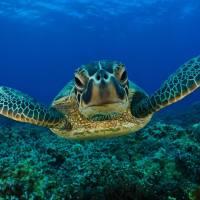 Una ONG con un Océano por salvar